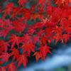 秋の紅葉を満喫!「紅葉散策をしよう!」
